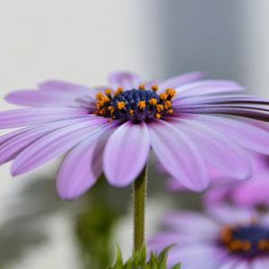 tue toimintaa kukka Gysy