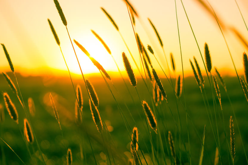 Timotei niitty vastavalokuva