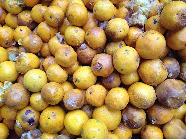 640px-rotten_oranges