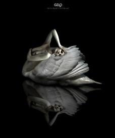 Ref: GZLo - 800. White Swan: 50cm x 70cm - Art Work: Gonzalo Villar - Model : Kristina Yakimova - Photo: Alexander Ullman