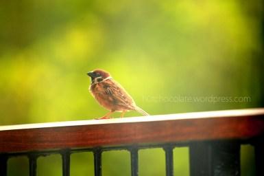 lil bird 7 wm