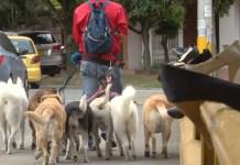 paseadores_perros