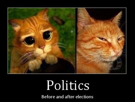 politics, before & after elections...