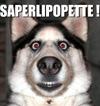 saperlipopette