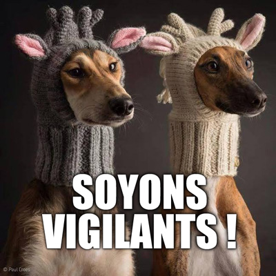soyons vigilants lol dog