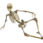 NextGen EHR Skeletal System