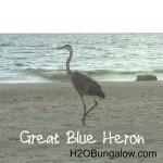 blue heron on the beach