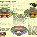 Creating a butterfly habitat free printable H2OBungalow