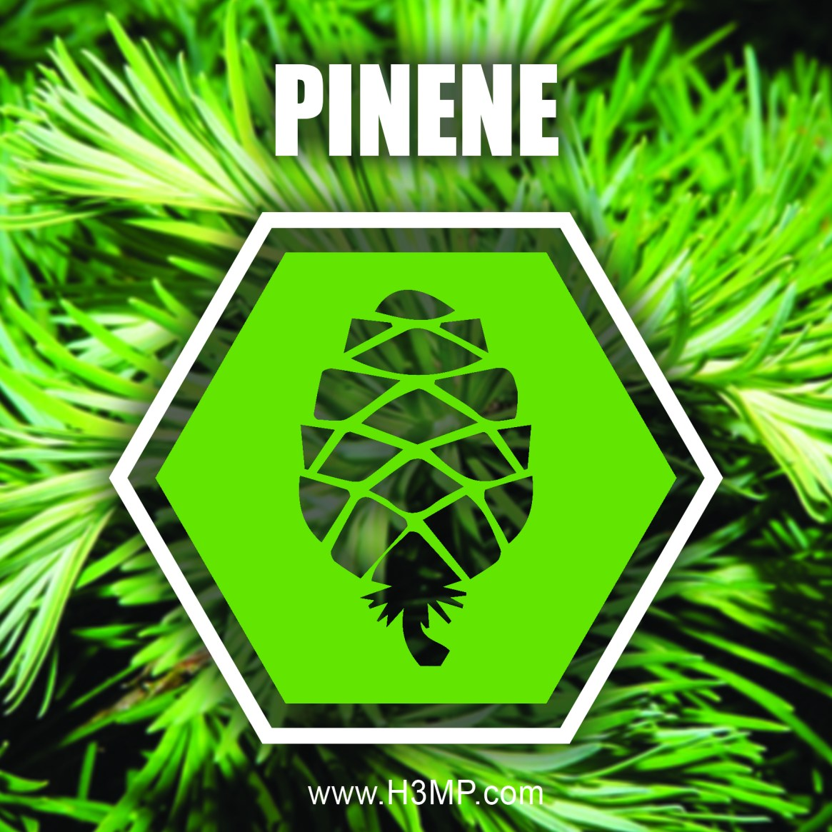 H3MP PINENE_1