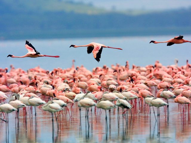 Image result for lake nakuru