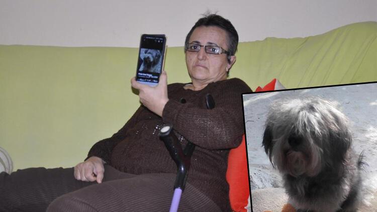 Felçli kadın, 6 aydır özel eğitimli köpeğini arıyor: 'Can yoldaşımdı'