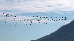 Göller Bölgesi'nde su kuşu sayımı başladı