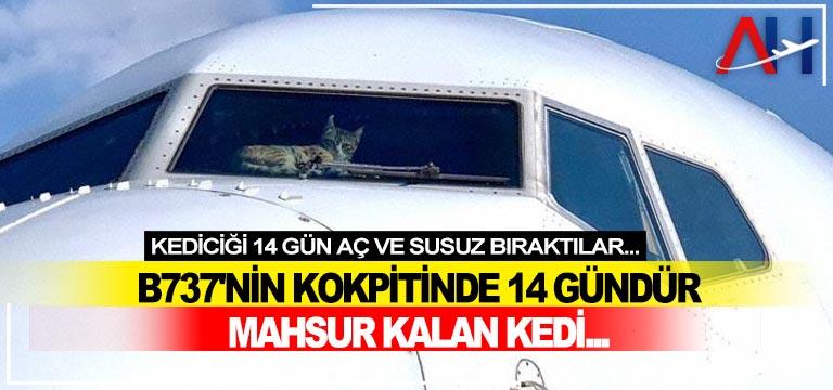 B737'nin kokpitinde 14 gündür mahsur kalan kedi…