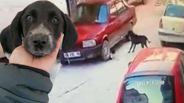 Otomobilin ezdiği yavru köpeğe müdahale etti! 'Vicdanım bırakmaya elvermedi'