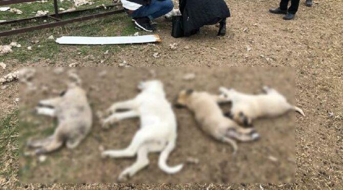Ankara'da zehirlenen 8 köpekten 4'ü öldü