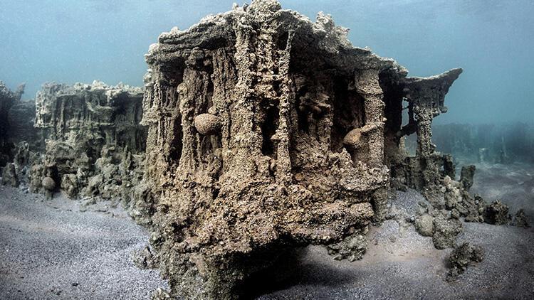 Van'da önemli keşif! 'Küçük mercan' olduğu belirlendi... 'Mucize gibi bir şey'