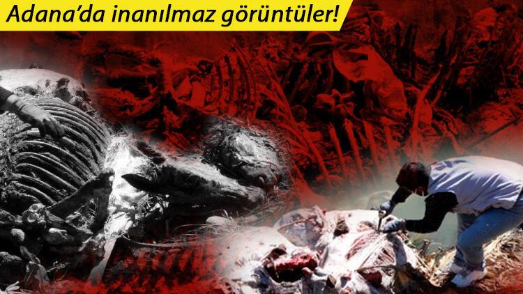 Adana'da dere yatağında dehşete düşüren görüntüler! Kokudan durulmuyor, onlarca bulundu