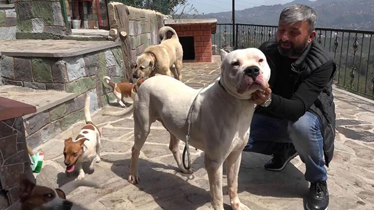 Yasaklı ırk olduğu iddia edilmişti Köpeğine kavuştu