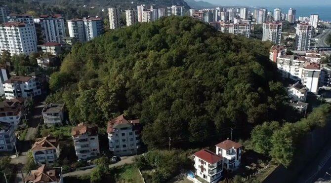 Erdoğan'ın kararıyla imara açılmıştı, ağaç kesimi başladı