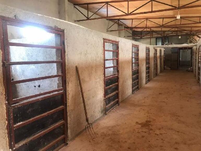 Kayıp 99 atla ilgili yeni gelişme Evi ve ahırında inceleme yapıldı