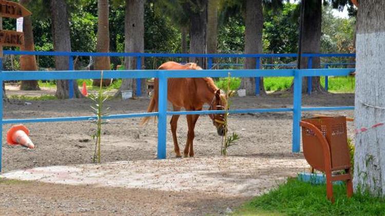 Kayıp 99 at olayında yeni detaylar! Veteriner işleri müdürüne 'ihmal' soruşturması