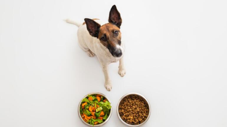 Köpeklerini vegan besleyen çifte ceza Hayvanlar için zararlı mı