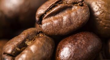 Eyvah, kahve türlerinin nesli tükeniyor Suçlu kim (Biz)