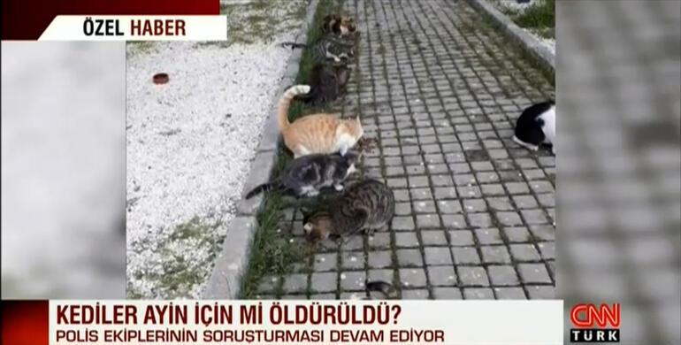 Esenyurt'ta dehşet Kesilerek öldürülmüşler…Yavru kediler ayine mi kurban gitti