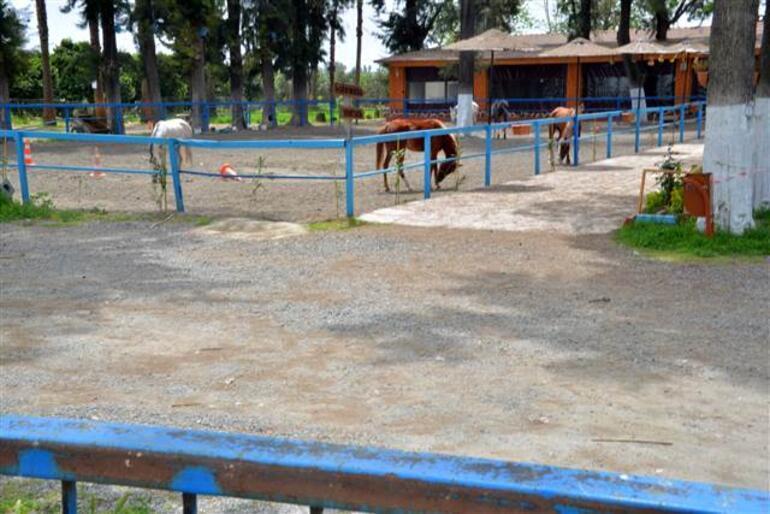 99 kayıp atla ilgili flaş gelişme Müdür Yıldıray Yıldızın memurluktan ihracı istendi