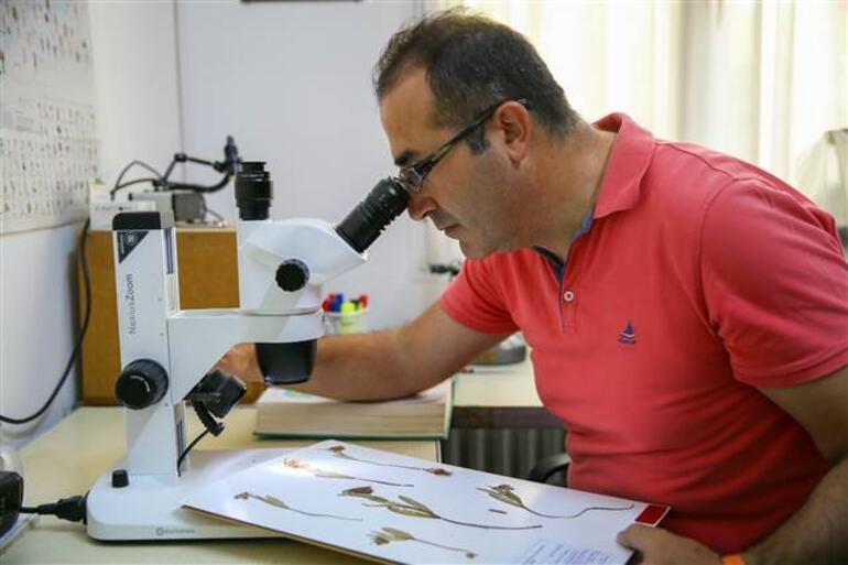 Amanos Dağlarında ters lale türü keşfedildi