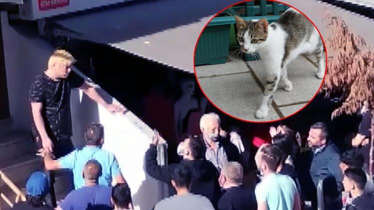 Küçükçekmece'de kedi yediğini itiraf eden Japon vatandaşı sınır dışı edilecek