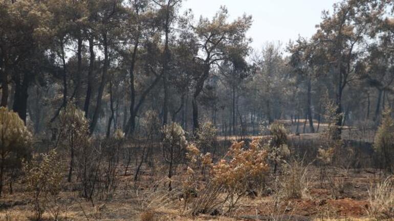 Manavgatta yangınla ilgili 16 yaşındaki C.Y. tutuklanmıştı Flaş detaylar...