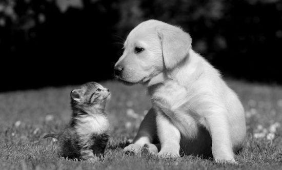La importancia de las mascotas