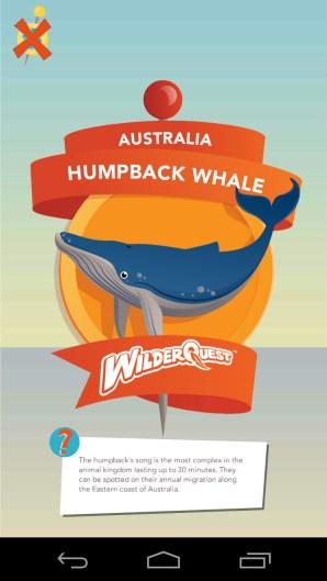 trade-humpback