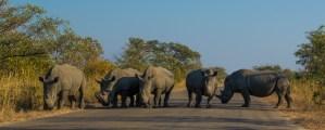 Como viajar pela África do Sul – Transporte