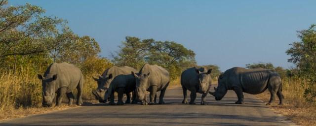 africa do sul como viajar