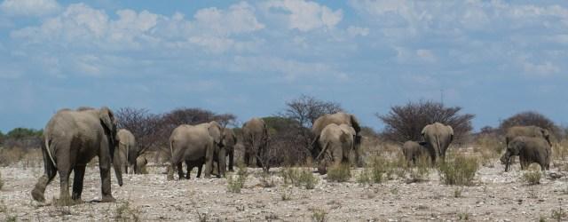 Etosha;Safari;Namibia