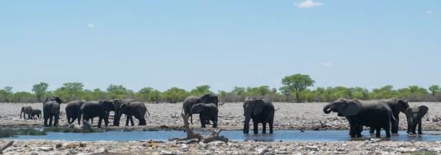 dicas viagem namibia