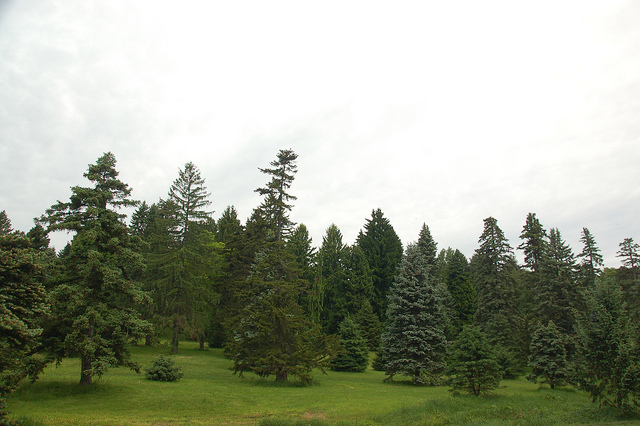 conifers - chris devers