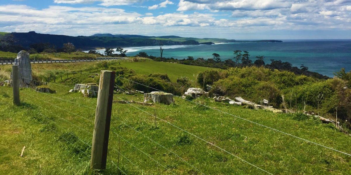 Planning a Day Trip to the Catlins, New Zealand