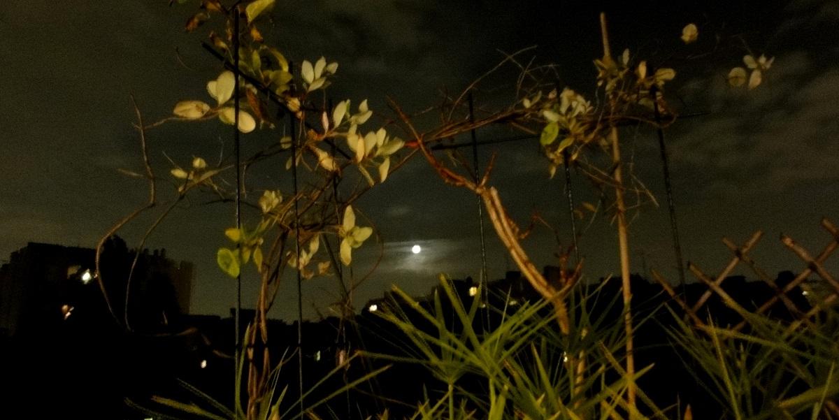 Habits of the Night
