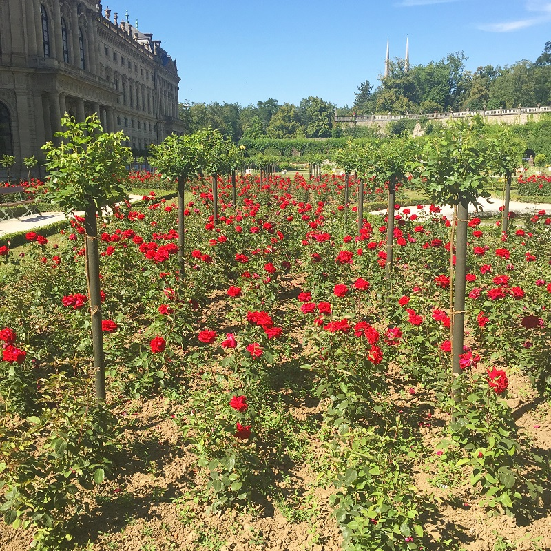 Right behind the Residence are a number of areas filled with roses.