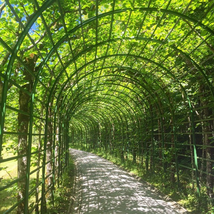 Roaming the vine covered western parterre.