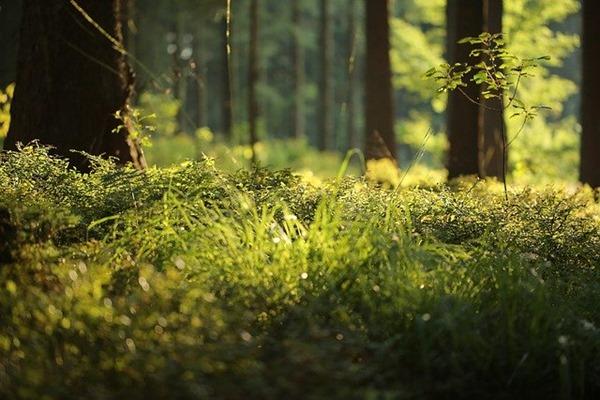forêt et zen attitude exposition naturelle