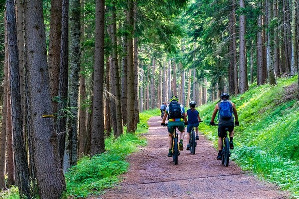 sport et activités à faire en forêt