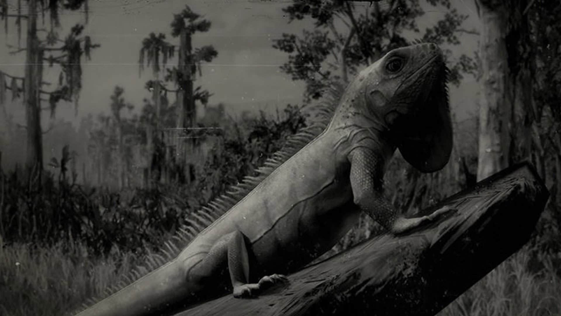 Red Dead Redemption 2 Dónde encontrar Iguanas