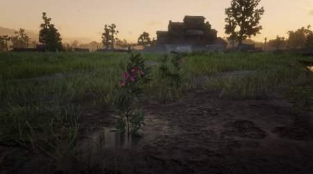 Red Dead Redemption 2: Dónde encontrar Salvia – Herbolario 3