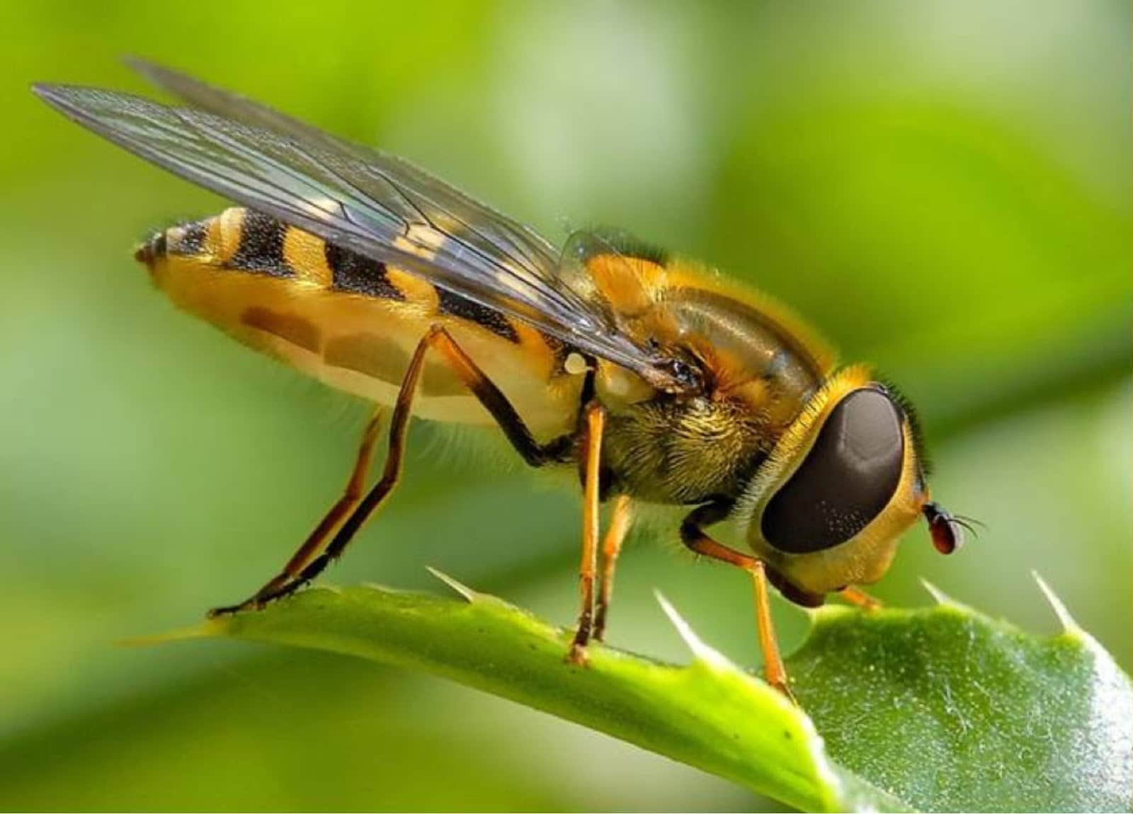 Resultado de imagen para imagenes abeja