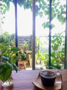 我が家のベランダの緑のカーテン