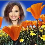 Fotomontaje de flores en el campo